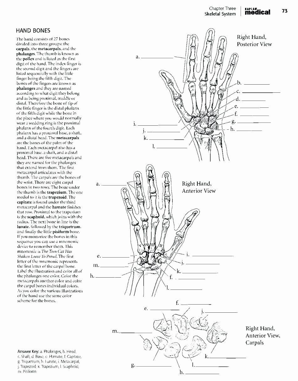- Online Anatomy Coloring Book Di 2020