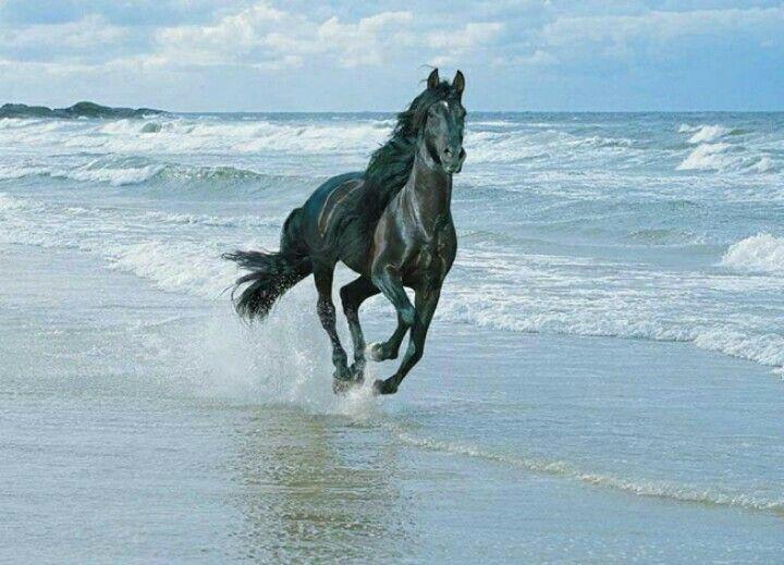 Escribí la novela en 2014, 'año del caballo' en el calendario chino. Este y otros hermosos equinos me acompañaron, me inspiraron y me dieron fuerza durante el proceso creativo.