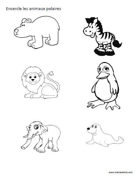 Coloring Winter Animals : Encercle les animaux polaires activité à imprimer prescolaire