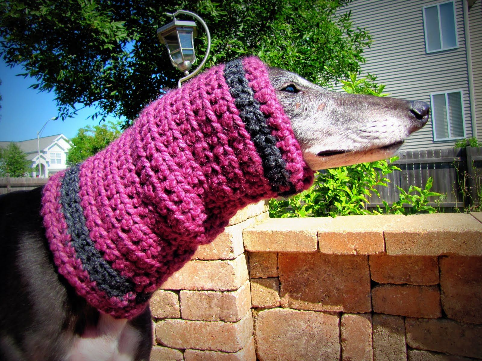 Snood Debut at Greyhound Threads! (With images)   Snood ...