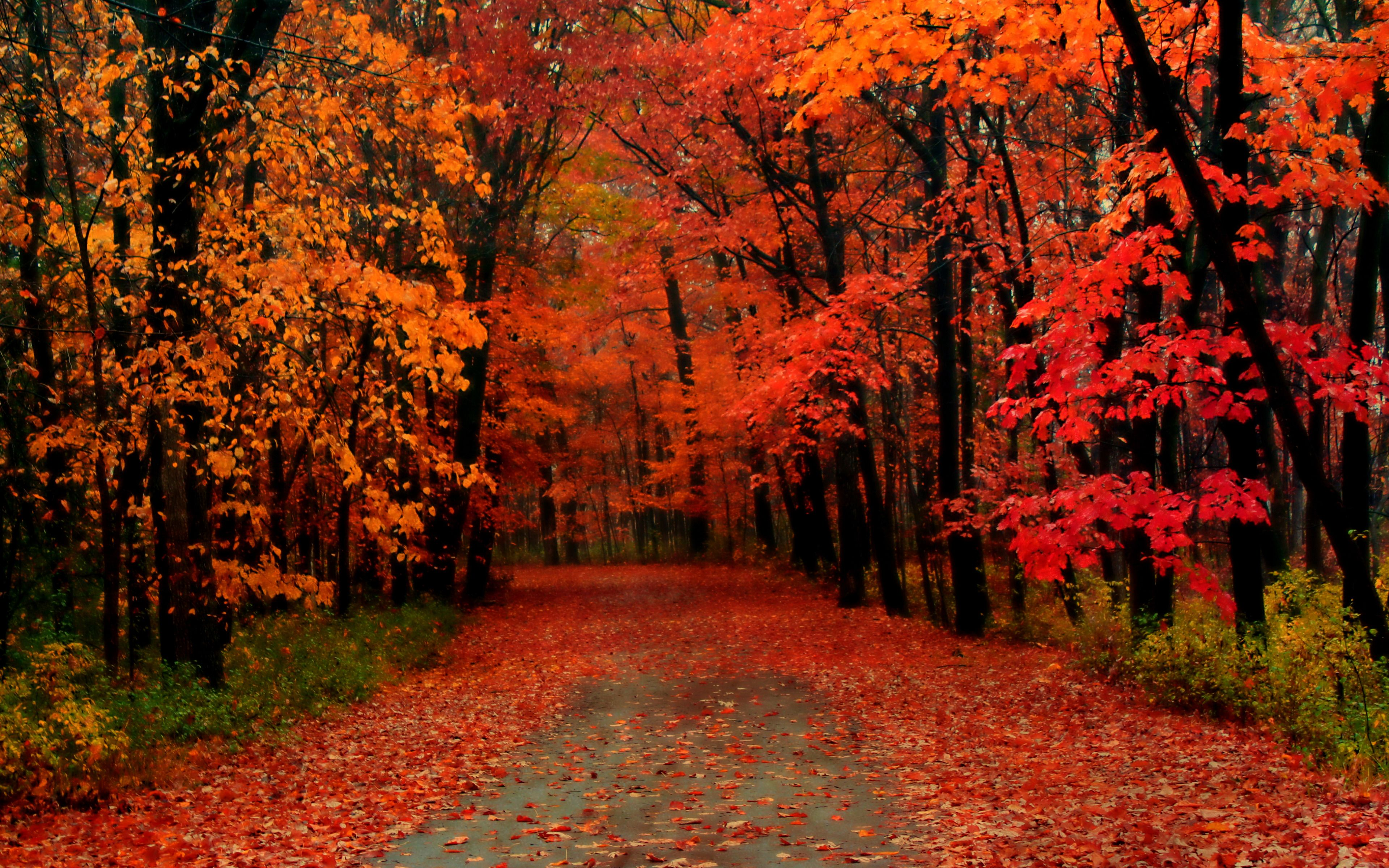 Love Catcher Chapter19 The Story Autumn Would Bring