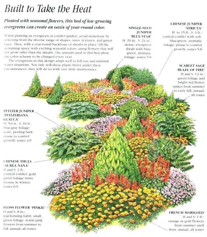 conifer garden ideas conifer garden designs evergreen