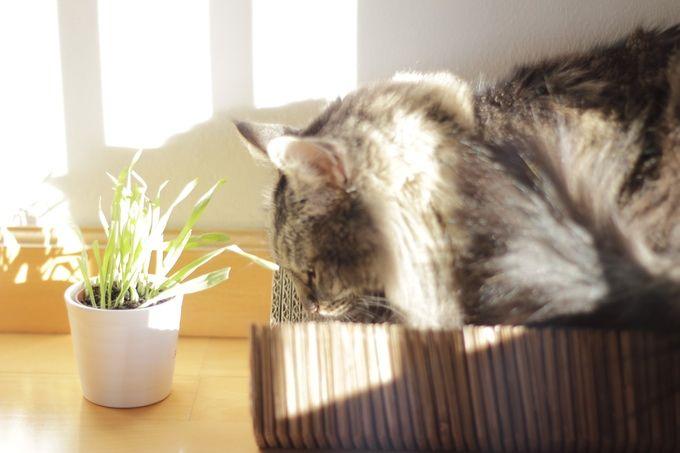 Nekohōmu.  House shaped cardboard scratchers, just for cats Rascadores de cartón en forma de casa exclusivamente para gatos.