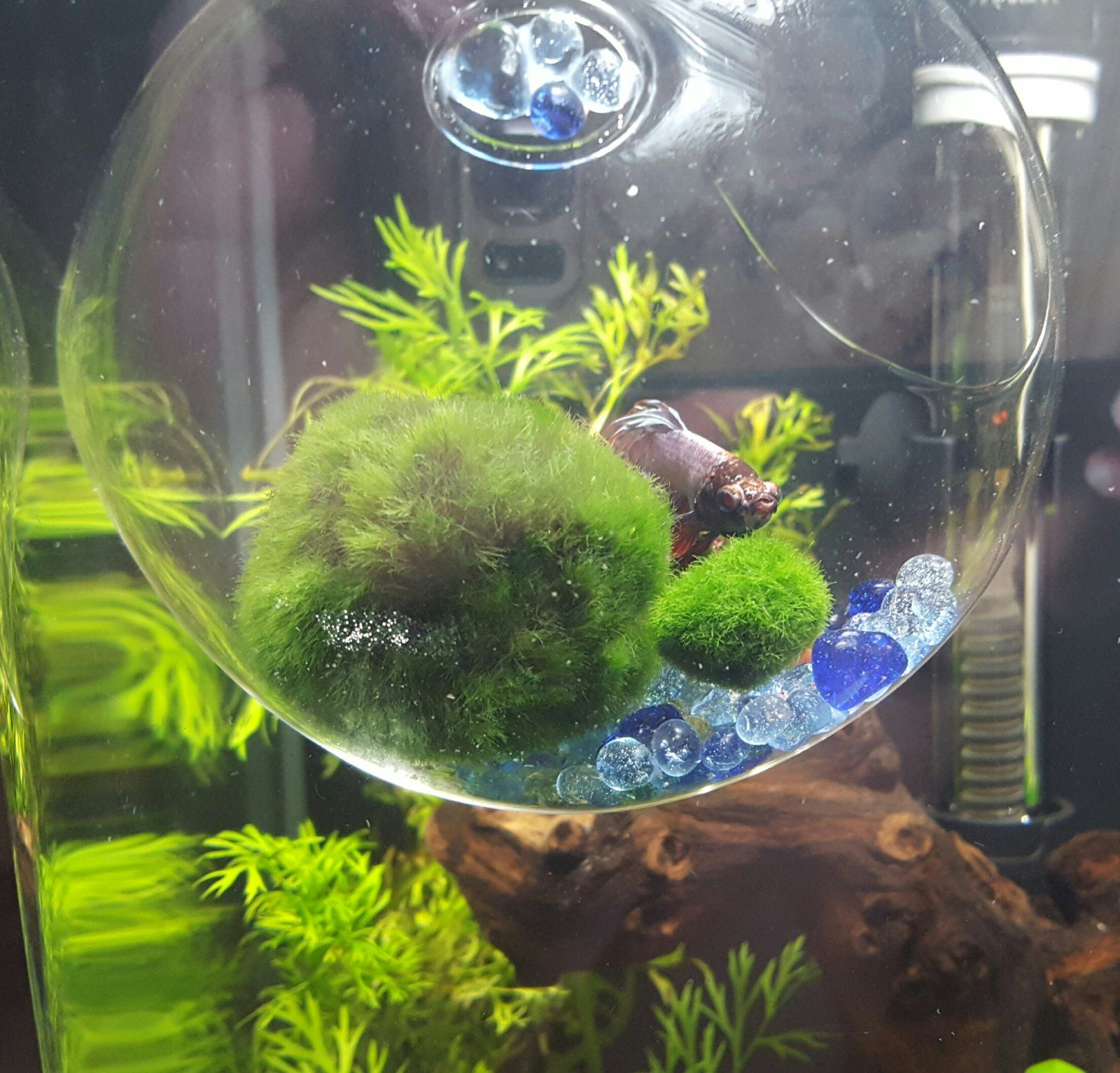 Hi guys have you made any diy toys and resting places for for Betta fish toys