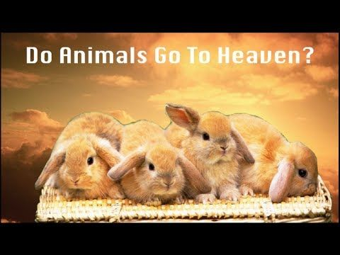 Do Animals Go To Heaven Quotes From The Bible Proving Animals