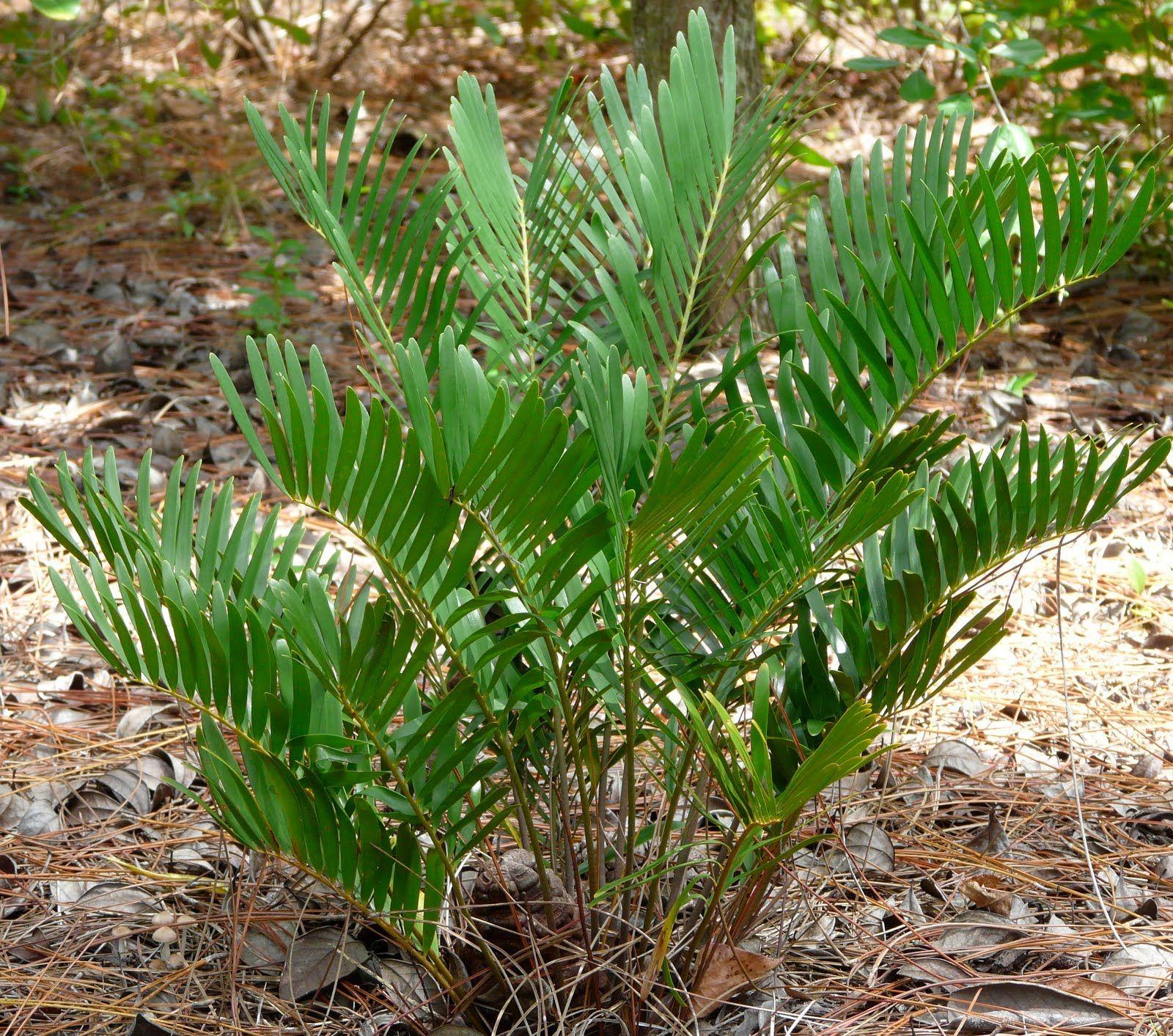 Native Plant Design: Florida Native Plant Society Blog