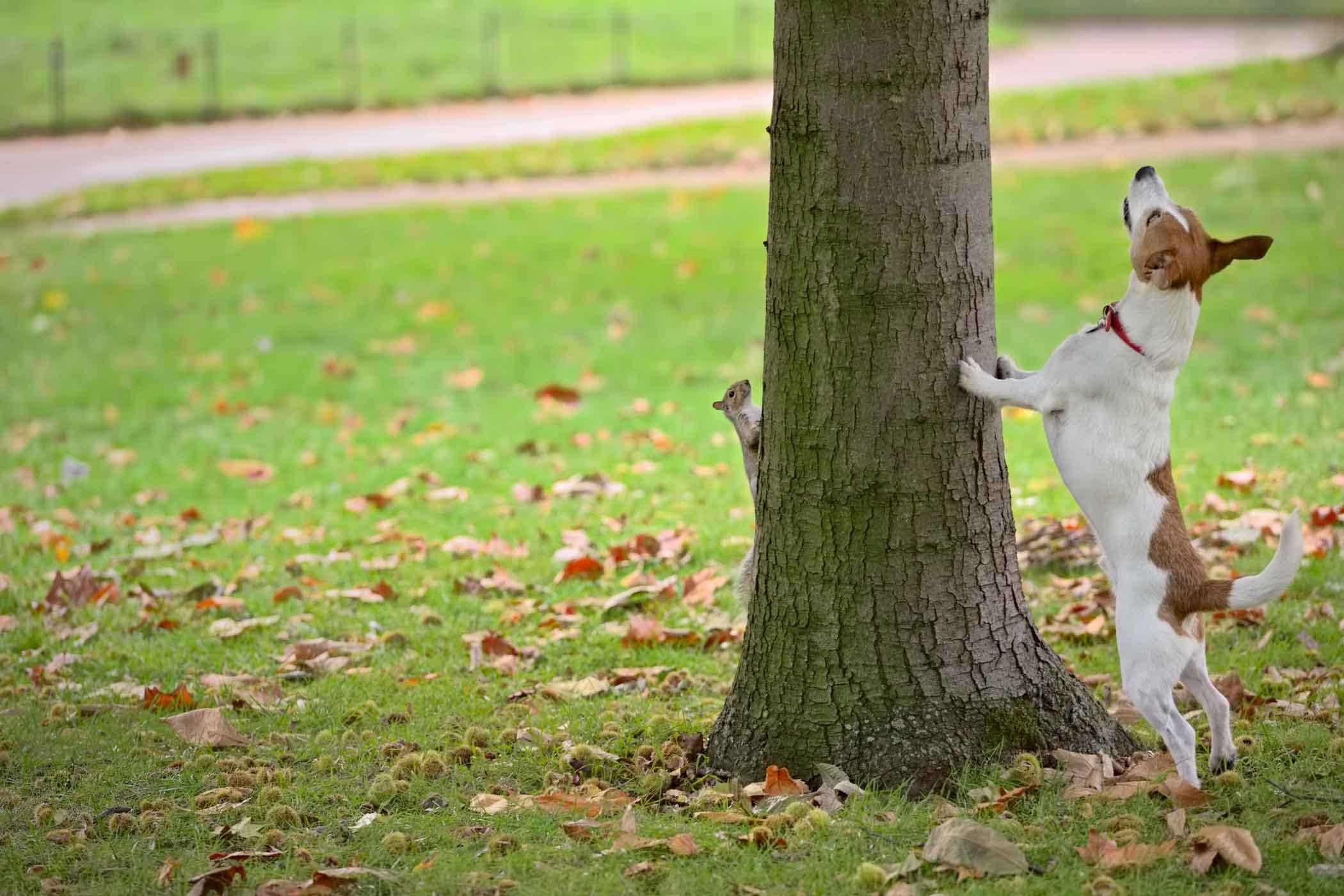How To Train Your Dog To Hunt Squirrels Dog Training Training