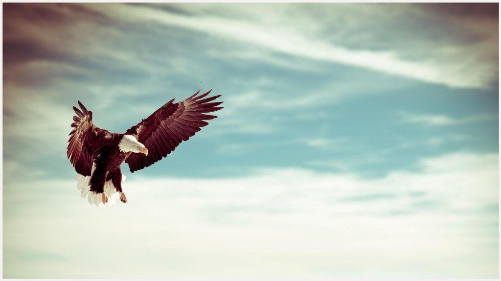 Flying Eagle Wallpaper 1080p
