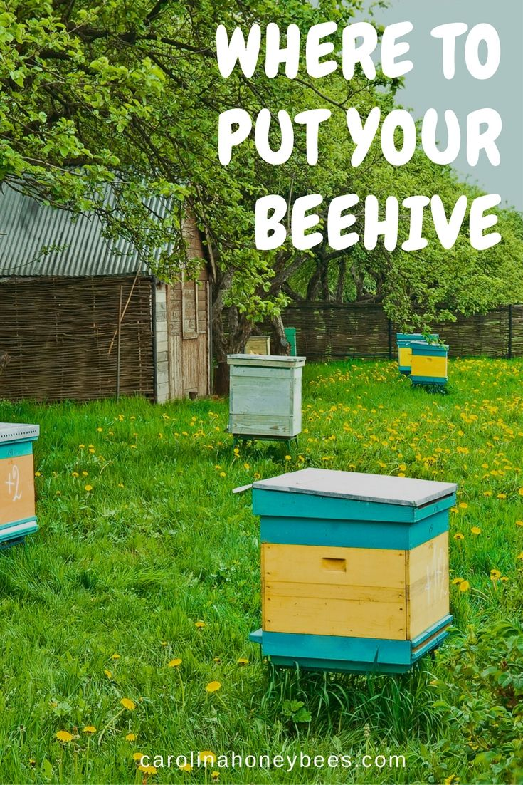 choosing the best location for a beehive beehive bees and