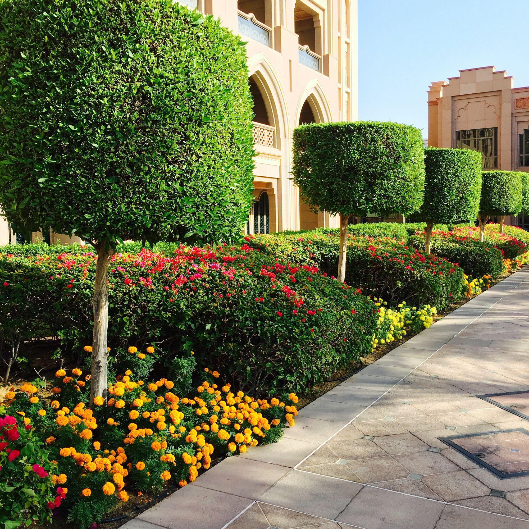 Lollipop garden at #EmiratesPalace in #Abudhabi