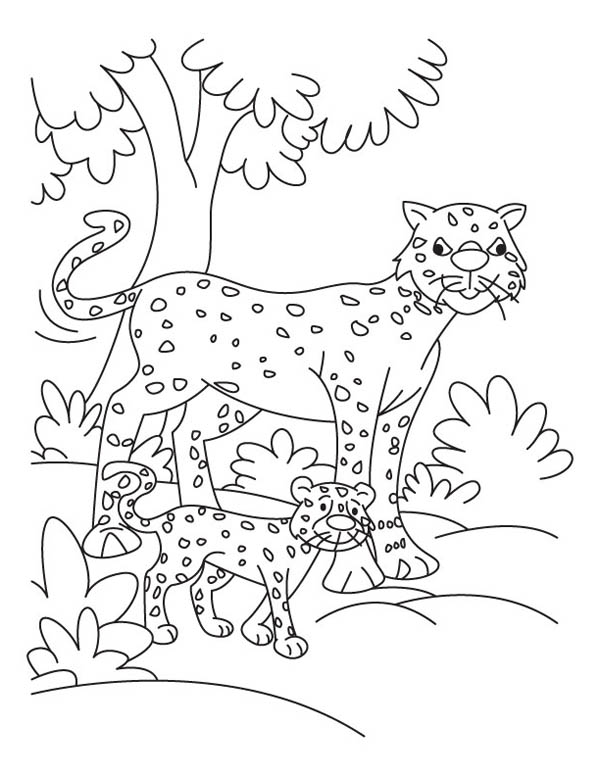 Pin By Debbie Tucker On Wild Cats Forest Coloring Pages Cheetah Pictures Coloring Pages