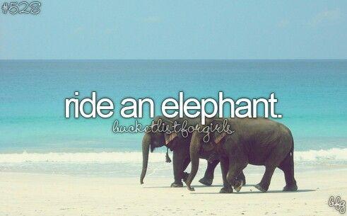 Ride a healthy elephant