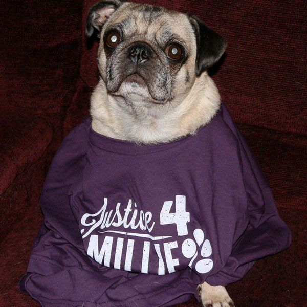 One of Millie's many canine supporters. From Justice 4 Millie Facebook page