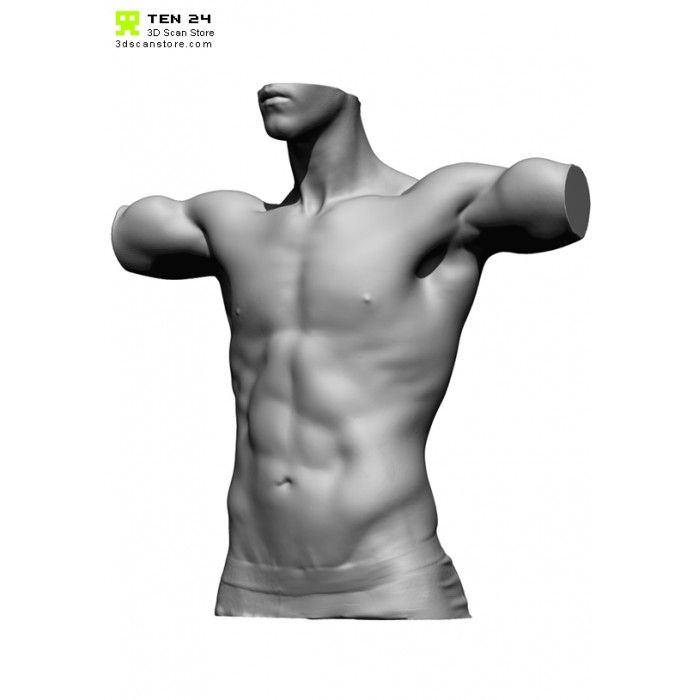 Male Torso Scan Bundle Anatomy Male Torso Human Anatomy