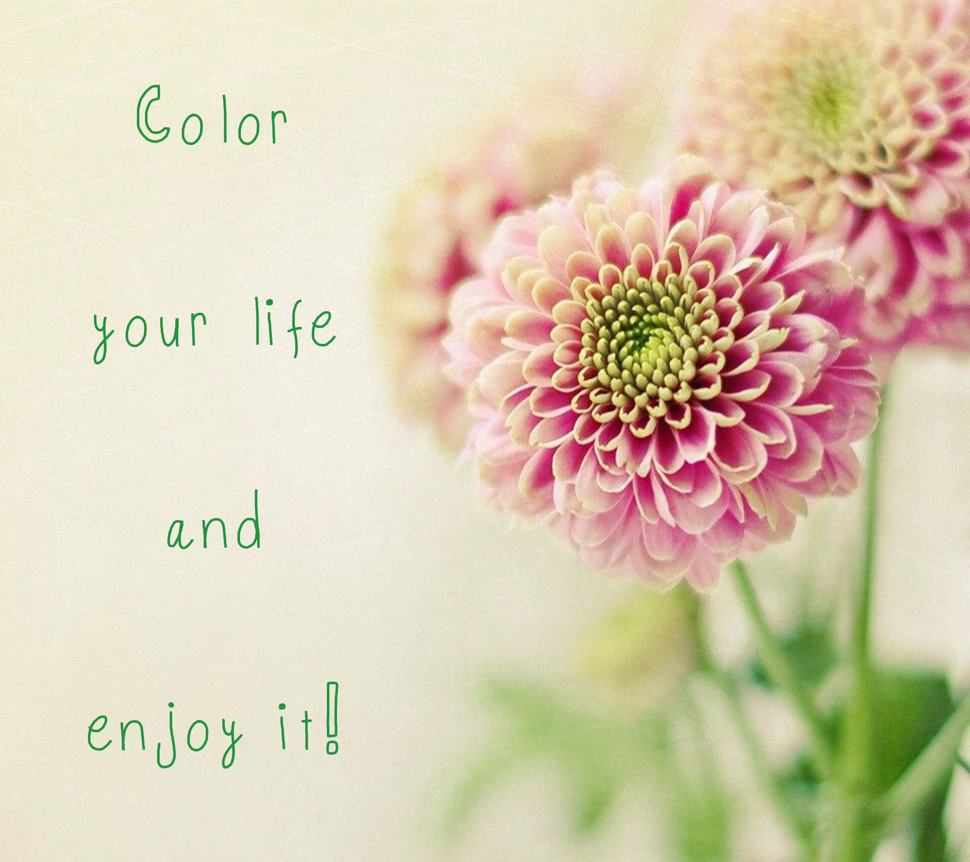 Color Your Life Quotes Color Your Life And Enjoy It  Quotes  Pinterest  Colors Life