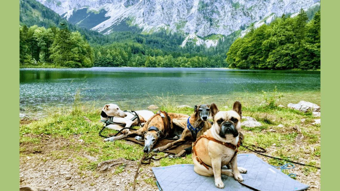 Urlaub Hund Salzkammergut See Wanderung Hund Erlaubt Urlaub Mit Hund Reisen Und Urlaub
