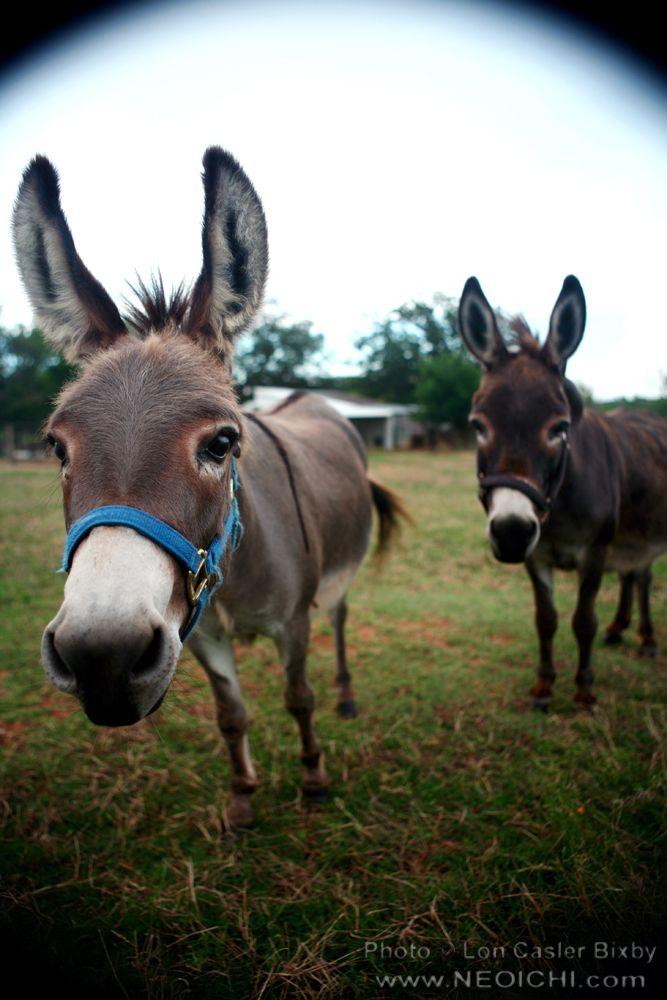 Image result for joshua texas farm animals