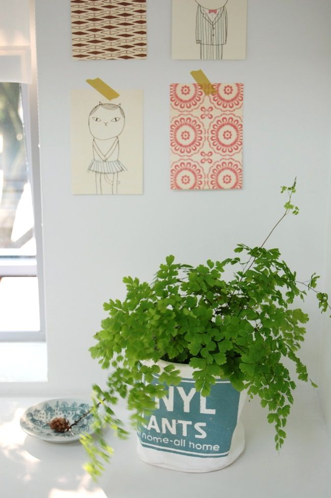 Maidenhair Fern And Stag Horn Fern Grow Well Indoors Or Shade.