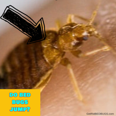 Do Bed Bugs Jump? That's A Good Question...Here's The