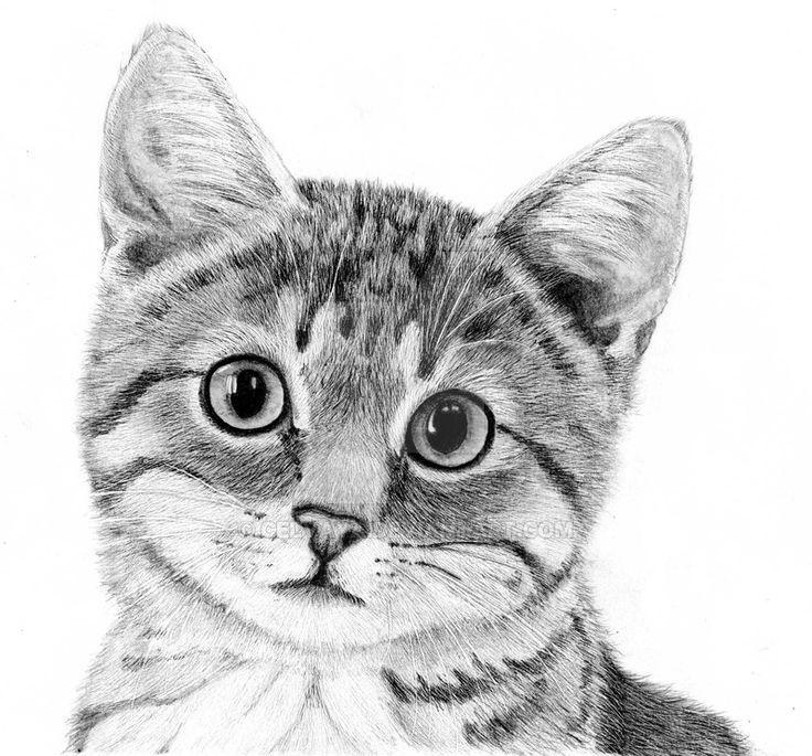 Corry From Celvaya On Deviantart Bleistiftzeichnungen Bleistiftzeichnungen Celvaya Corry Deviantart Bleistiftzeichnungen Katze Zeichnen Tiergemalde