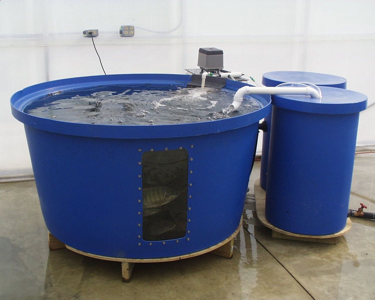 Aquaculture system garden aquaponics pinterest for Fish for aquaponics