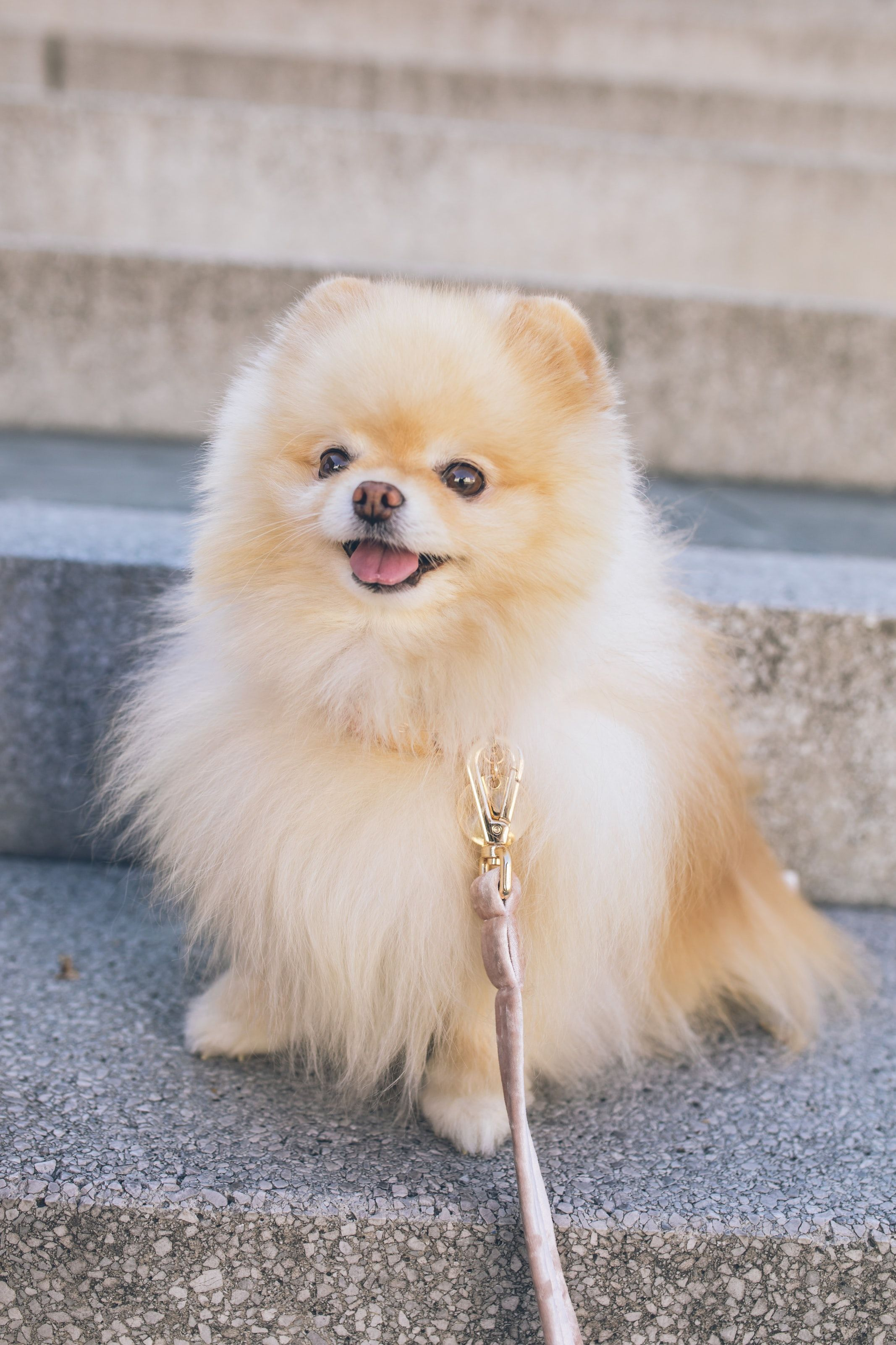 Small Dog Breeds With Pictures And Price