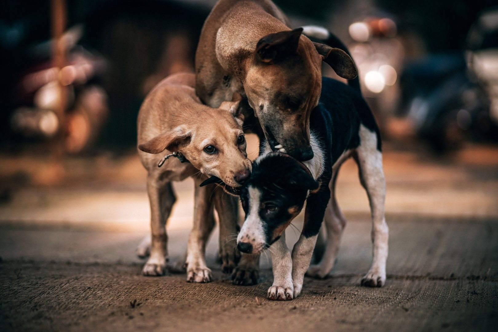 Pin By Natalie Lyon On Dogs Dog Behavior Dog Charities Happy Dogs