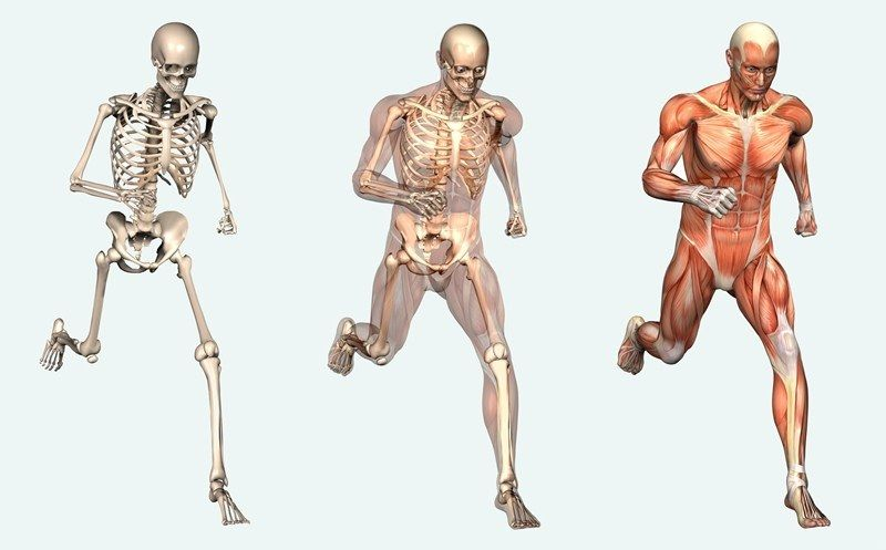 Facts About Human Body So You Think You Know Everything About Your