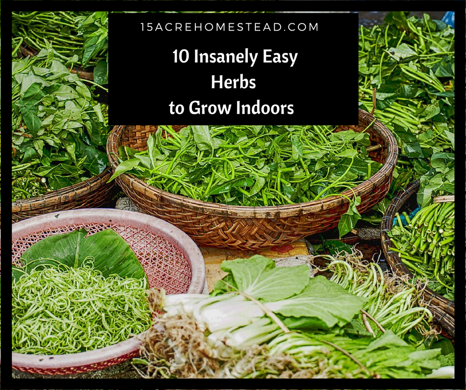10 Insanely Easy Herbs To Grow Indoors Easy Herbs To 640 x 480
