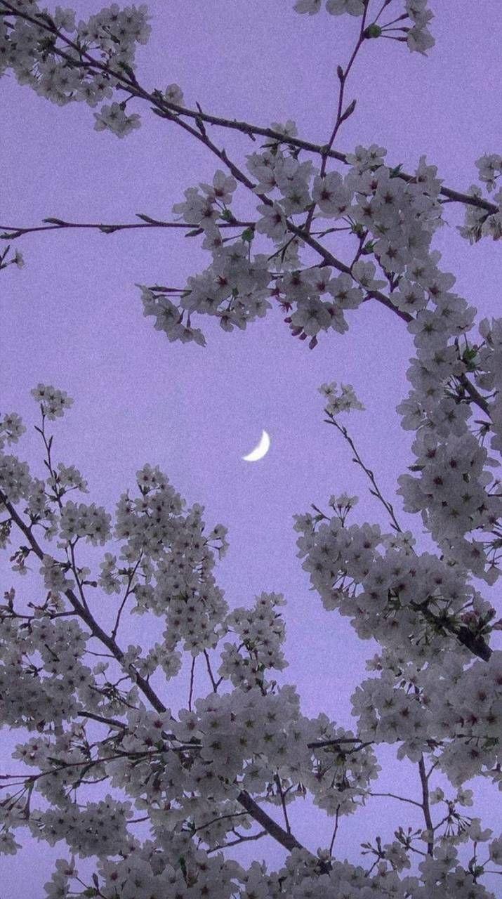 Purple sky wallpaper by manolocueto1 - 4392 - Free on ZEDGE™