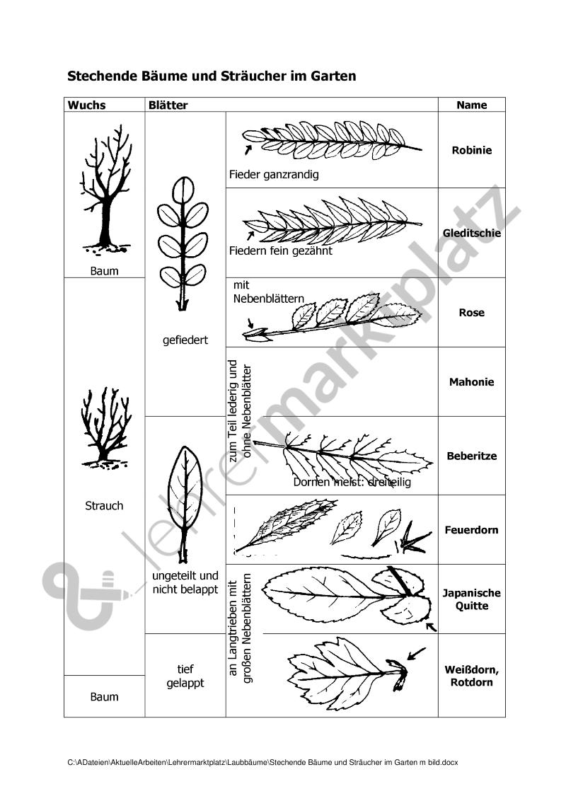 Bestimmungstabelle für Laubbäume nach Blattmerkmalen – Biologie ...