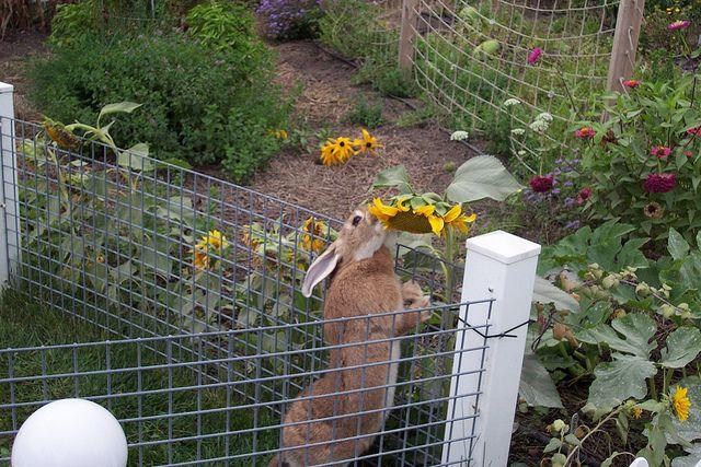 Nice outdoor pen for big bunny bunny