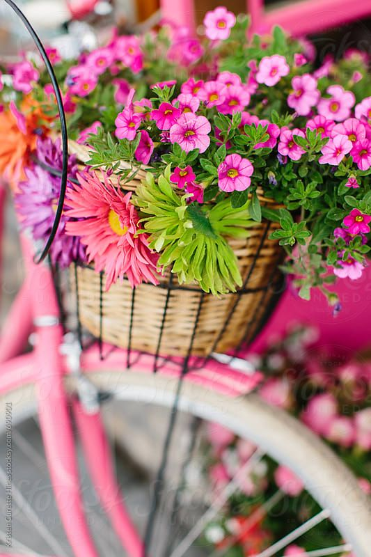 Close up of a cruiser bike basket full of colorful flowers. Download this high-resolution stock photo by KRISTEN CURETTE HINES from Stocksy United.