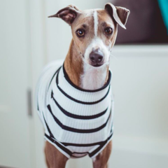 See Who's Styling | Mister Woof