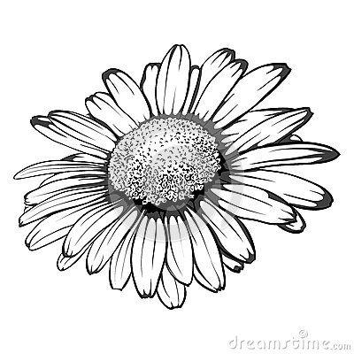 Dessin Marguerite Margaridas Desenho Esbocos De Flor Flores Preto E Branco