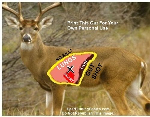 Bow Shot Placement On Deer | Hunting | Pinterest