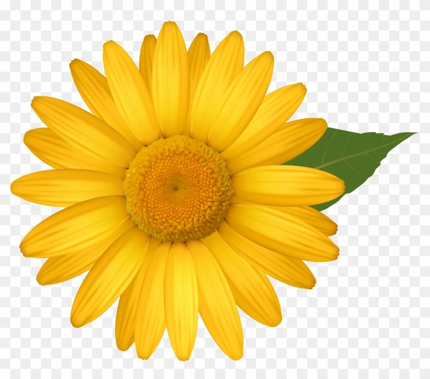 Find Hd Yellow Daisy Png Image Daisy Flower Clipart Png Transparent Png To Search And Download More Free Transparen Flower Clipart Png Flower Clipart Daisy