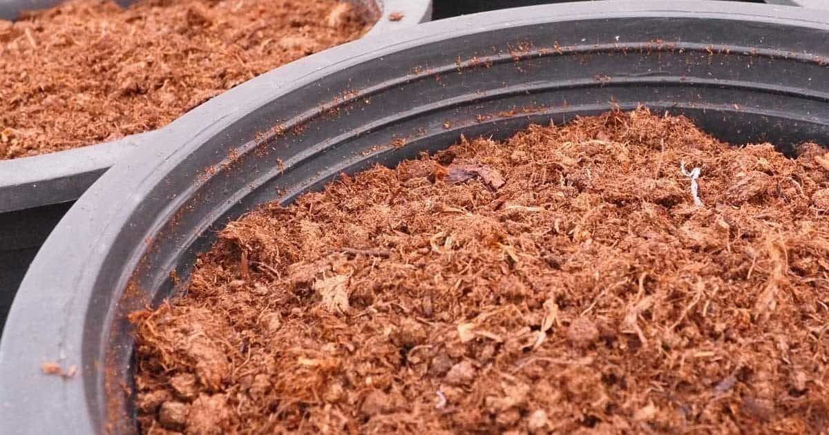 Using Peat Moss Do Use Peat In Your Growing? in 2020