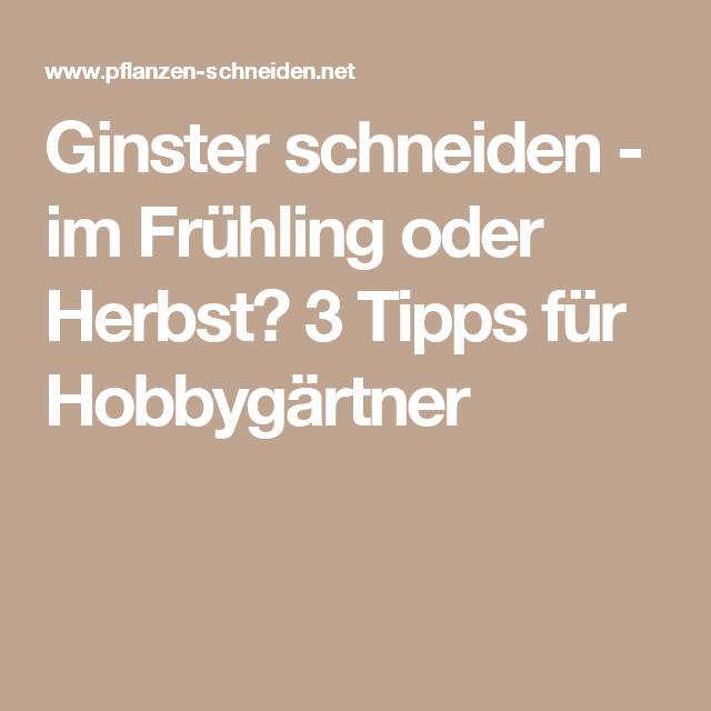 Ginster Schneiden - Im Frühling Oder Herbst? 3 Tipps Für ... Garten Im Herbst Tipps Ideen