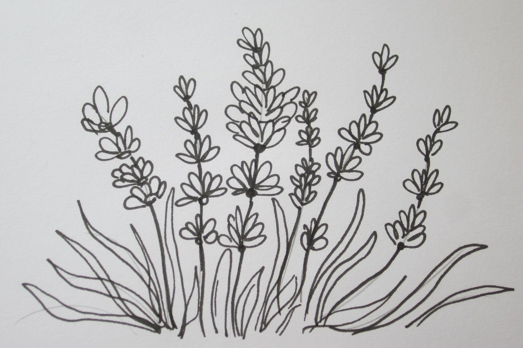 The Easy Way To Draw A Lavender Flower Drawings Flower Drawing Easy Drawings