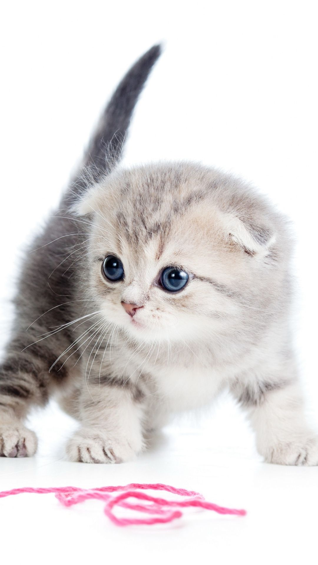 Kitten Ball Thread White Background iPhone 6 plus