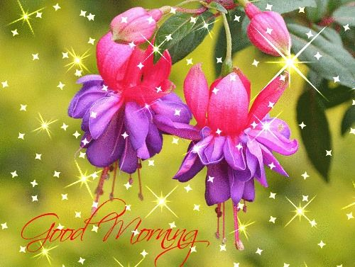 Macro De Brinco De Princesa Fucsia Fuchsias Flowers S Macro A Cultivar The Result Of A Cross Fertilisation Fuchsia 12 20 04 07 047 Lovely Flowers Wallpaper Fuchsia Flower Purple Flower Pictures