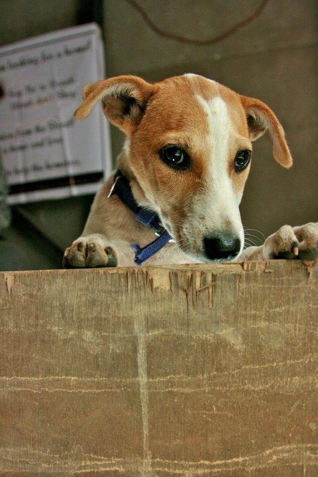 Pet Carnival and Adoption drive at Jaaga Pets, Adoption