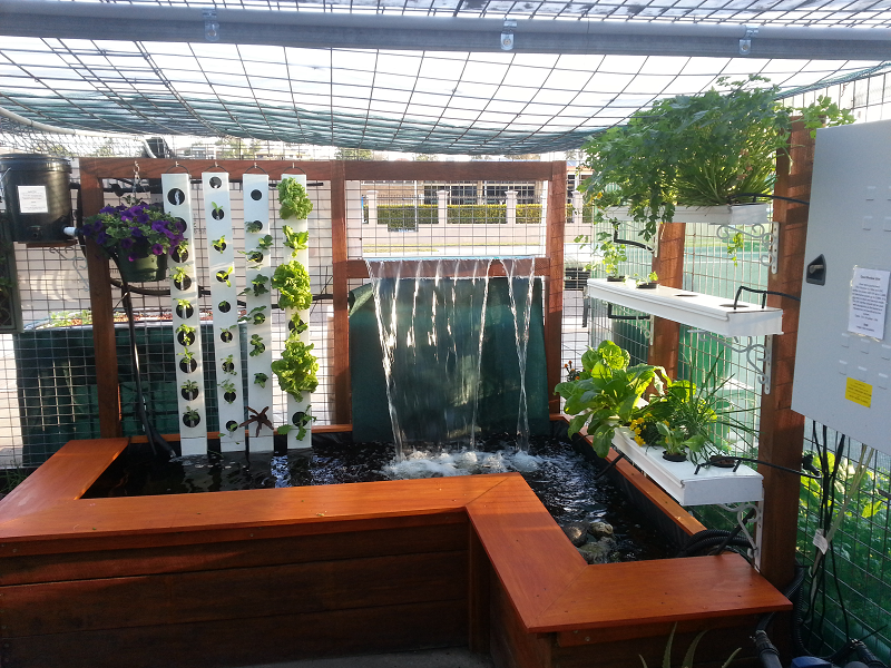Aqua Gardening Pond and Waterfall Aquaponics system 2 Farm Life