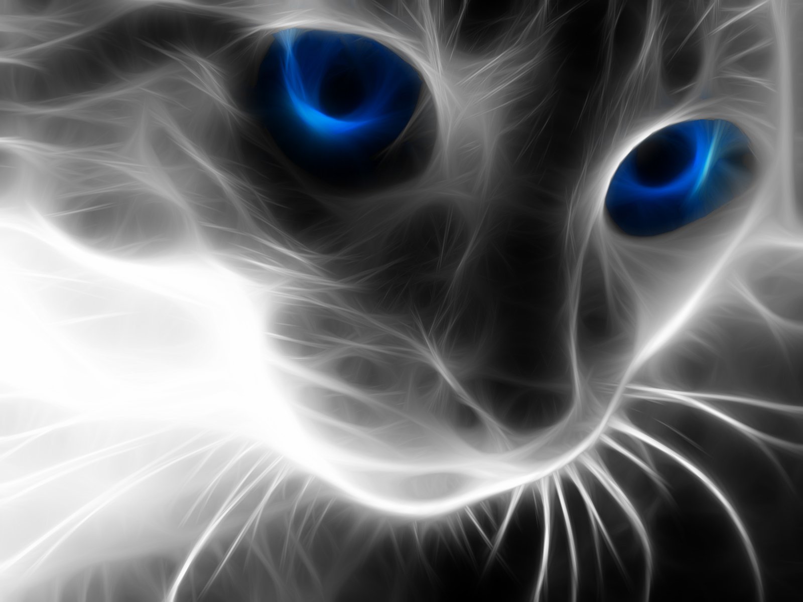 Post Your Desktop Wallpaper Afo Forum Cat With Blue Eyes Cat Wallpaper Wild Cats