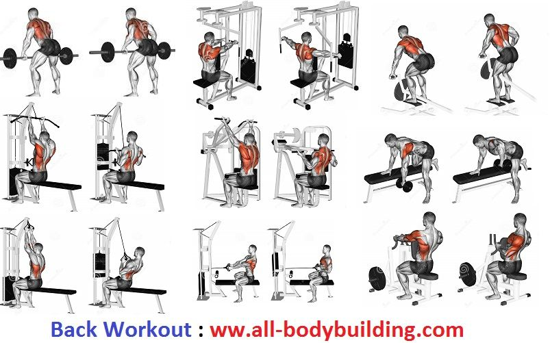 Best Exercises For Building Muscle Mass