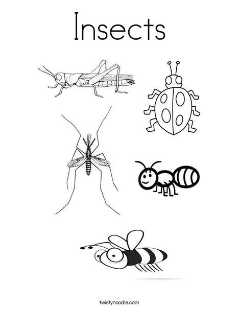 insects coloring page from twistynoodlecom - Insect Coloring Pages