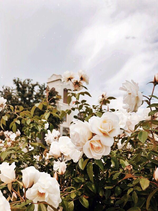 White Roses Vintage Aesthetic iPhone Wallpaper Summer Greenery - Roses