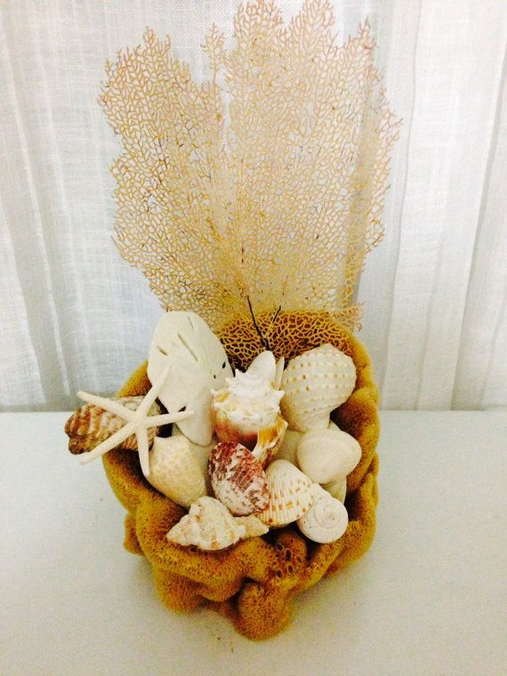 Seashells and Sea fan in Natural Sponge Vase Beach Decor | Natural ...