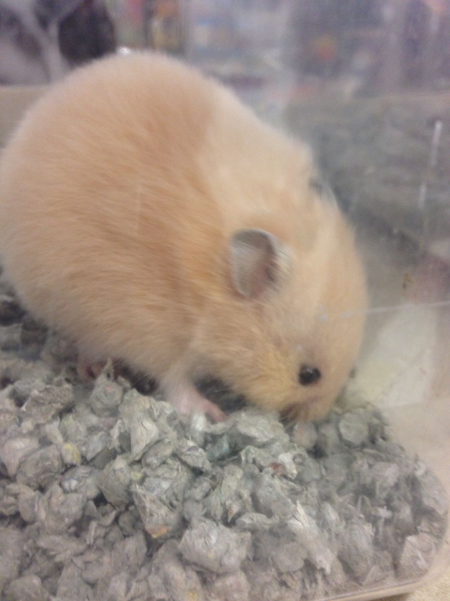 Omg I Saw This Hamster At Petco The Other Day I Want It